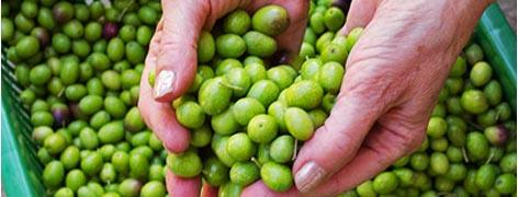 Oliven fra hagen