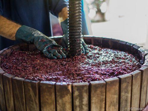 Pressing av druene skjer i små mengder etter hvert som de er modne. Foto: Stefano Puzzuoli.